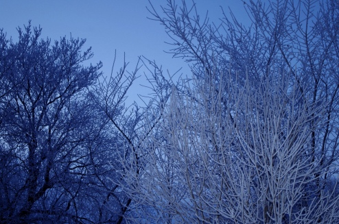 Frost Cold Winter Trees No Spend January Freezing Temperatures