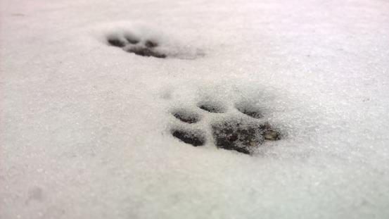 snow-861557_640